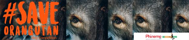 banner-lomba-blog-orangutan