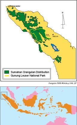 Persebaran orangutan di Sumatera.