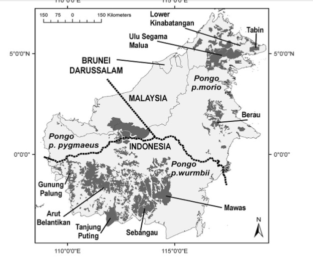 Persebaran orangutan di wilayah Kalimantan, terdapat di Kalimantan Tengah, Barat dan Sabah. (sumber: persebaran orangutan wilaya Kalimantan tahun 2003, makalah dampak perubahan iklim Departemen Kehutanan PHKA).