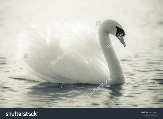 Atau Anda lebih suka definisi cantik menurut aliran The Graceful Swan? (foto sumber: pinterest.com)