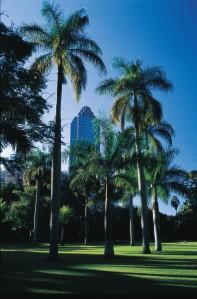 City Botanical Garden, taman di tengah kota Brisbane yang berciri khas pohon palem. (foto: dokumentasi TEQ)