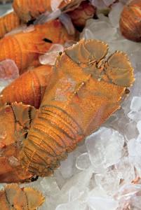 Lobster Moreton Bay Bug khas Queensland yang diambil dari Teluk Moreton, Queensland. (foto: dokumentasi TEQ)
