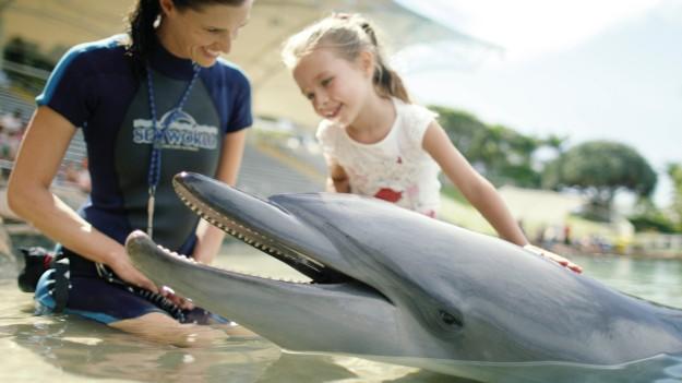 memberi makan lumba-lumba di Seaworld Gold Coast. (foto: dok. TEQ)